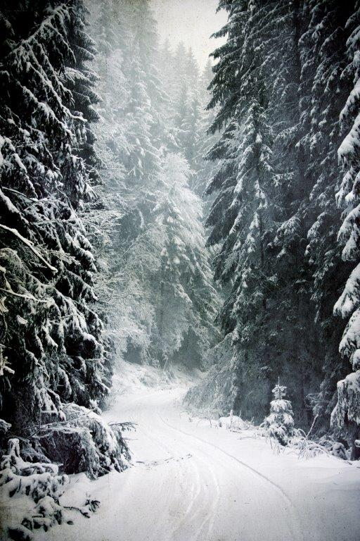 Christmas Trees - The Hera Forest