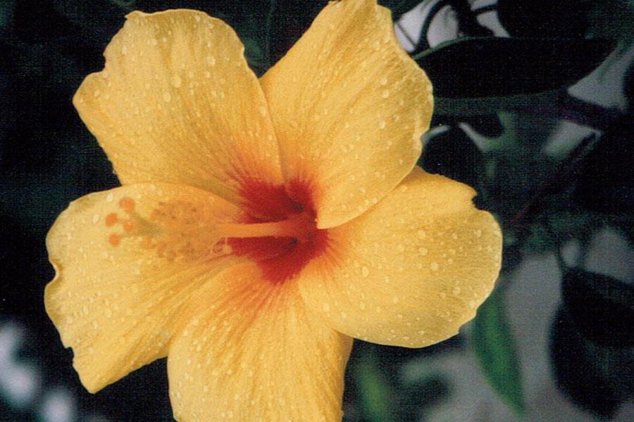 Blühen zu können
