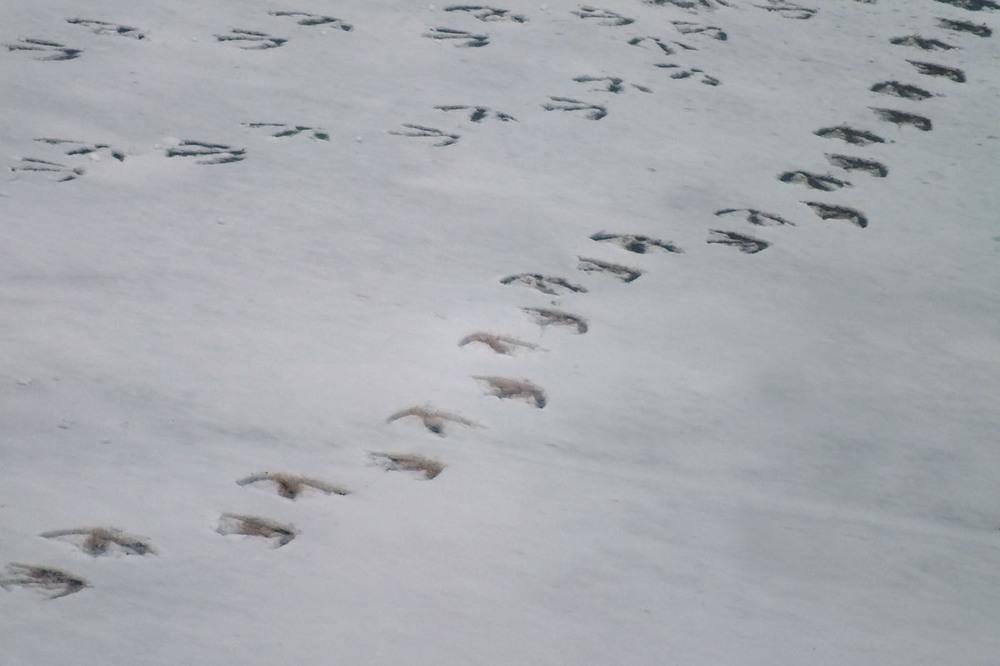 Swan Steps