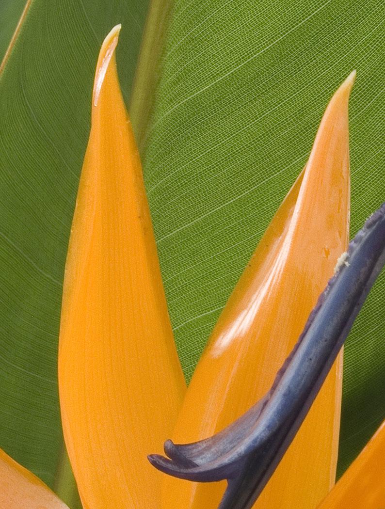Nature's Texture