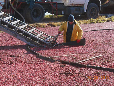 iroquois-cranberry-growers-harvest