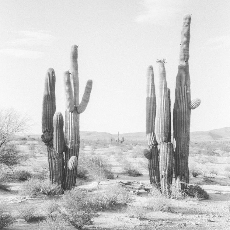 cactus2.png