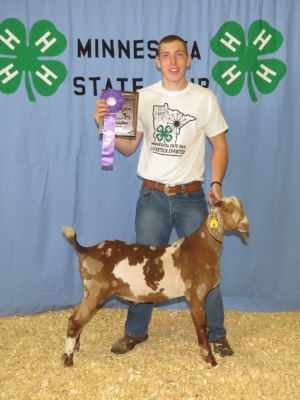 2017 Minnesota State Fair 4-H Livestock Show     Grand Champion Dairy Meat Goat     Marshall Johnson     Rushford-Peterson / Fillmore County