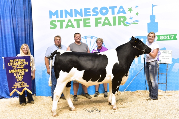 2017 Minnesota State Fair 4-H Livestock Show    Grand Champion Dairy Steer    Emily Orban    Lake Mills (IA) / Freeborn County