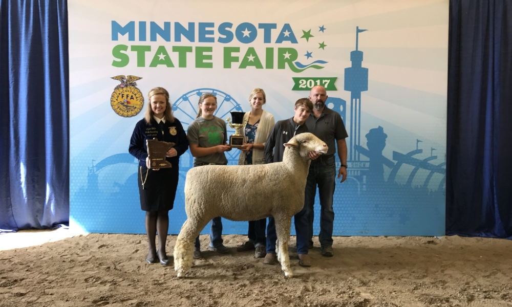 2017 Minnesota State Fair FFA Livestock Show Supreme Champion Sheep Female Grand Champion Rambouillet Gabe Geiser New York Mills FFA