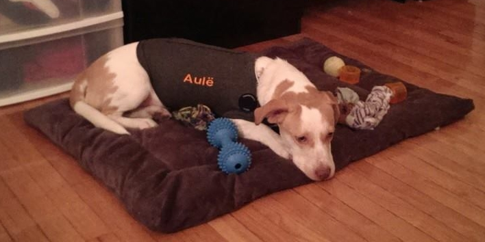 Aule_Place_Thundershirt