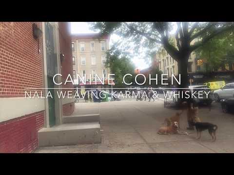 Canine Cohen Dog Training