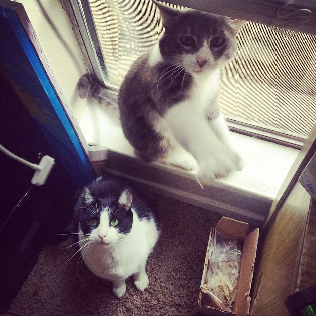 I have two cats: Oscar and Moo