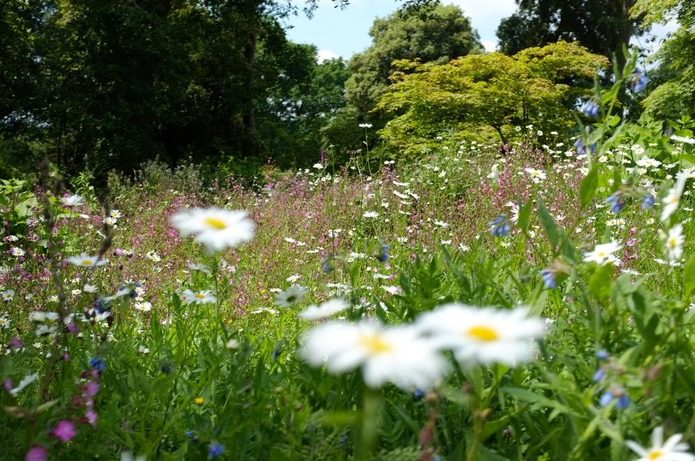 Hidcote - National Trust