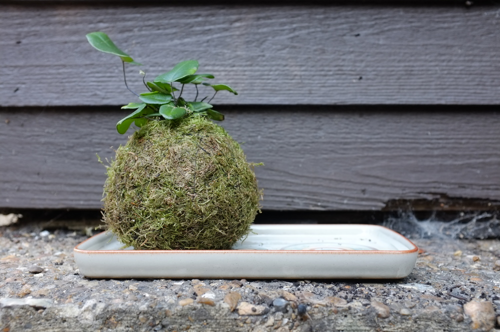 www.humbelle.co.uk my first moss ball