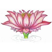 lotus-flower-student-carmen-mensink.jpg