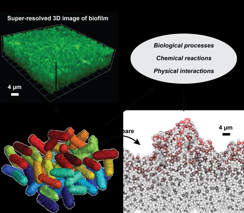 Research The Gahlmann Lab 3d Cell Diagram Biofilm 3 01
