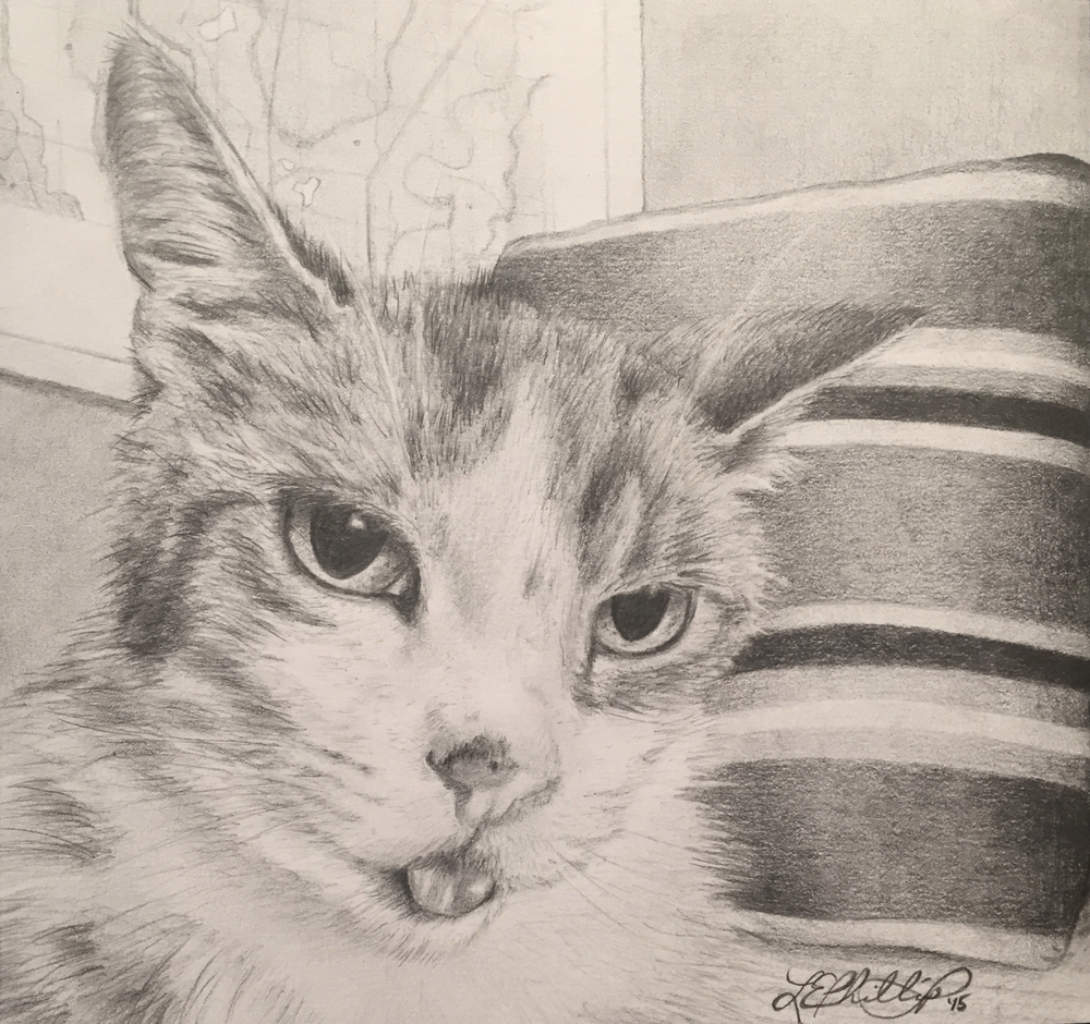 RUSSELL    Meet Russell; the crankiest feline I've had the pleasure of knowing. He was the (somewhat) patient subject of this drawing, which I ended up giving to his family following his passing. Russell had a pretty vibrant history, as far as cats go. Having paid the kitten premium at the Humane Society for this little guy who was waiting for the rest of his teeth to come in, the owners were in for a surprise at his first vet visit. As it turns out, this kitty was a malnourished senior at ten years old, and was actually losing teeth rather than waiting for them to come in. You'll notice he's sticking out his tongue... Given his lack of teeth, that's not by choice. You were worth every penny, Russ-cat.