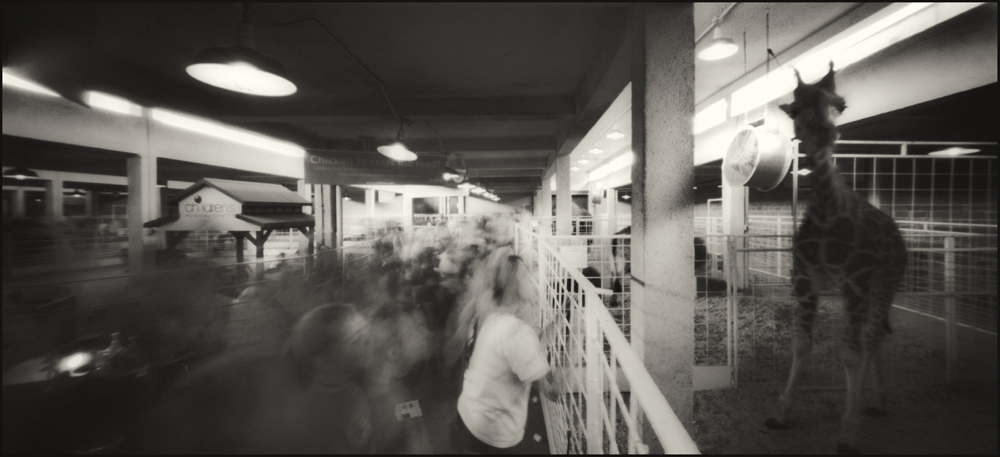 Petting Zoo, The Pan American Building.  Panoramic Pinhole Image © 2008.