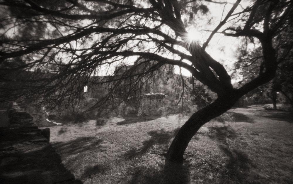 Mesquite Tree, Mission San José y San Miguel de Aguayo