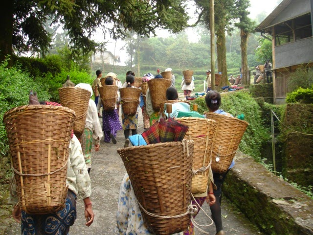 Tea pickers leaving after a day's work