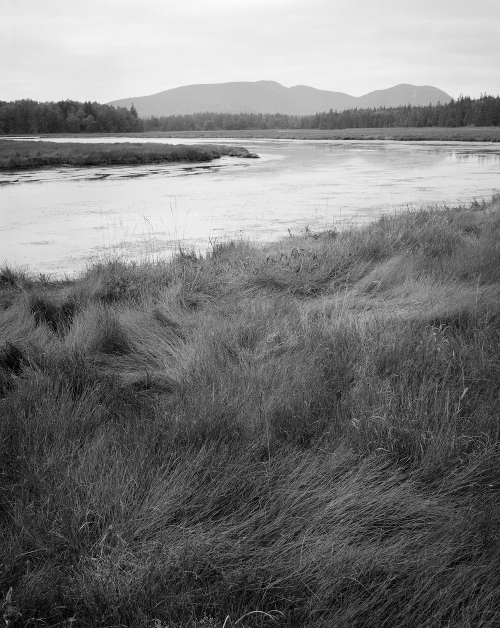 Bass Harbor Marsh. Acadia National Park, Maine. 1999