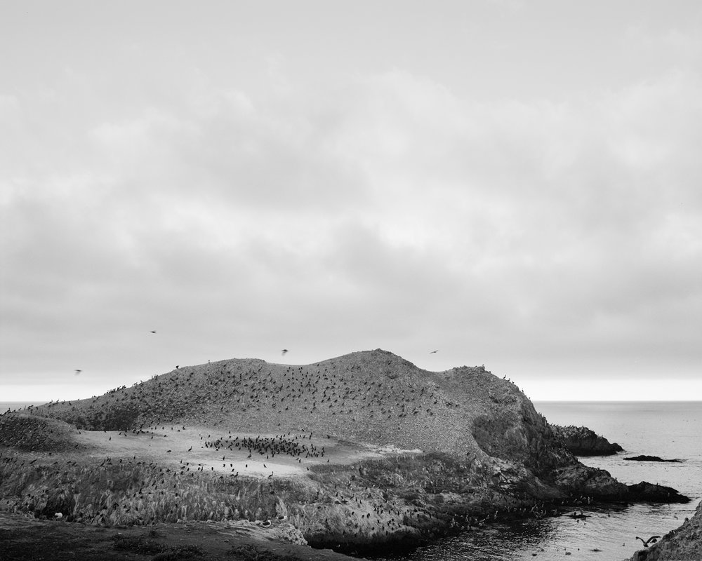 POINT LOBOS II