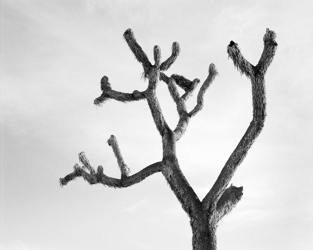 JOSHUA TREE III