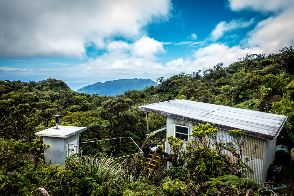 The Amazing Poamoho Cabin