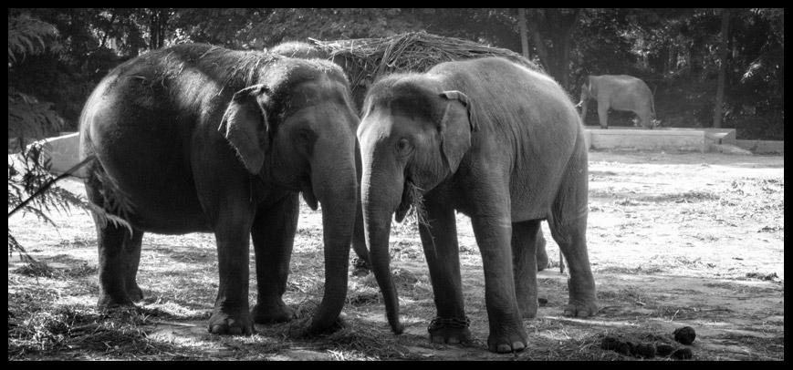 Mysore Zoo!