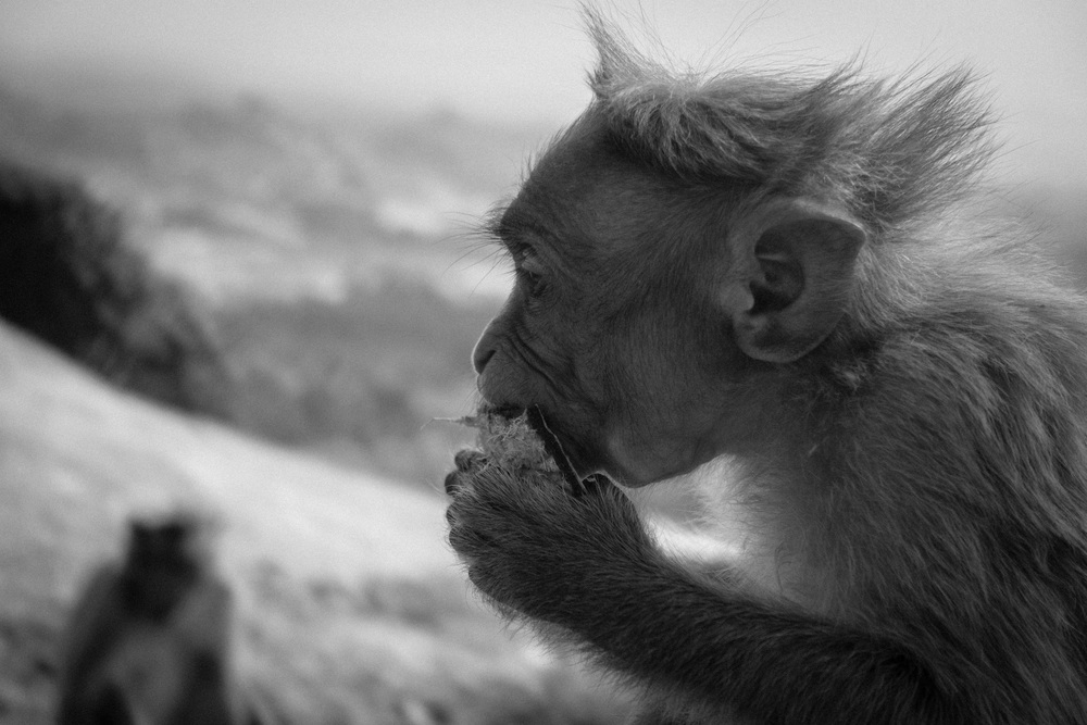 monkey B&W2.jpg
