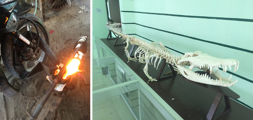 Left: Getting the tire patched (vulcanized), very old school! Right: 12ft alligator! Turns out the mangroves are infested!