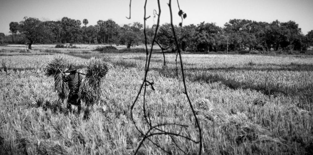 rice-worker.jpg