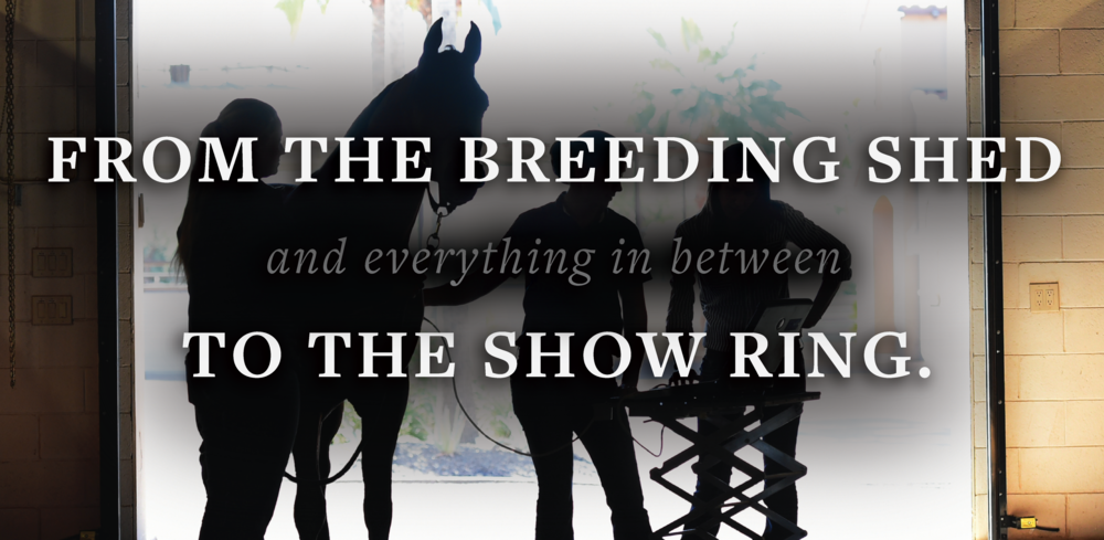 EAVS Web banner breeding slide-12.png