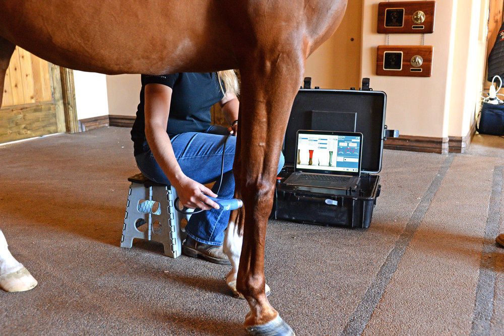 Smart RLT Equine Laser Therapy.JPG
