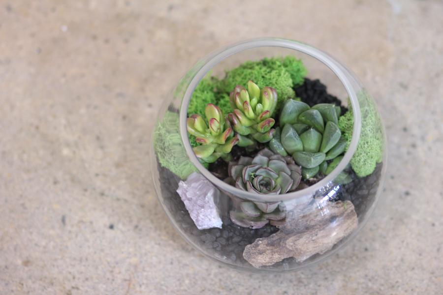 succulentnestrq.jpg
