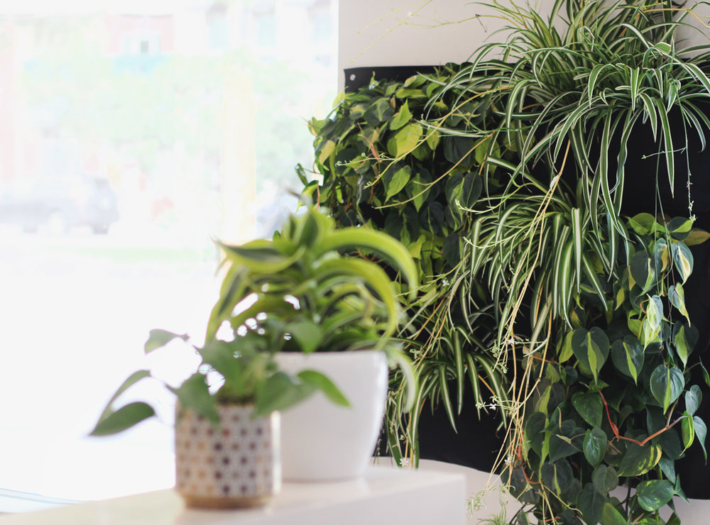 living walls - fresh. lush. green. eco-friendly.