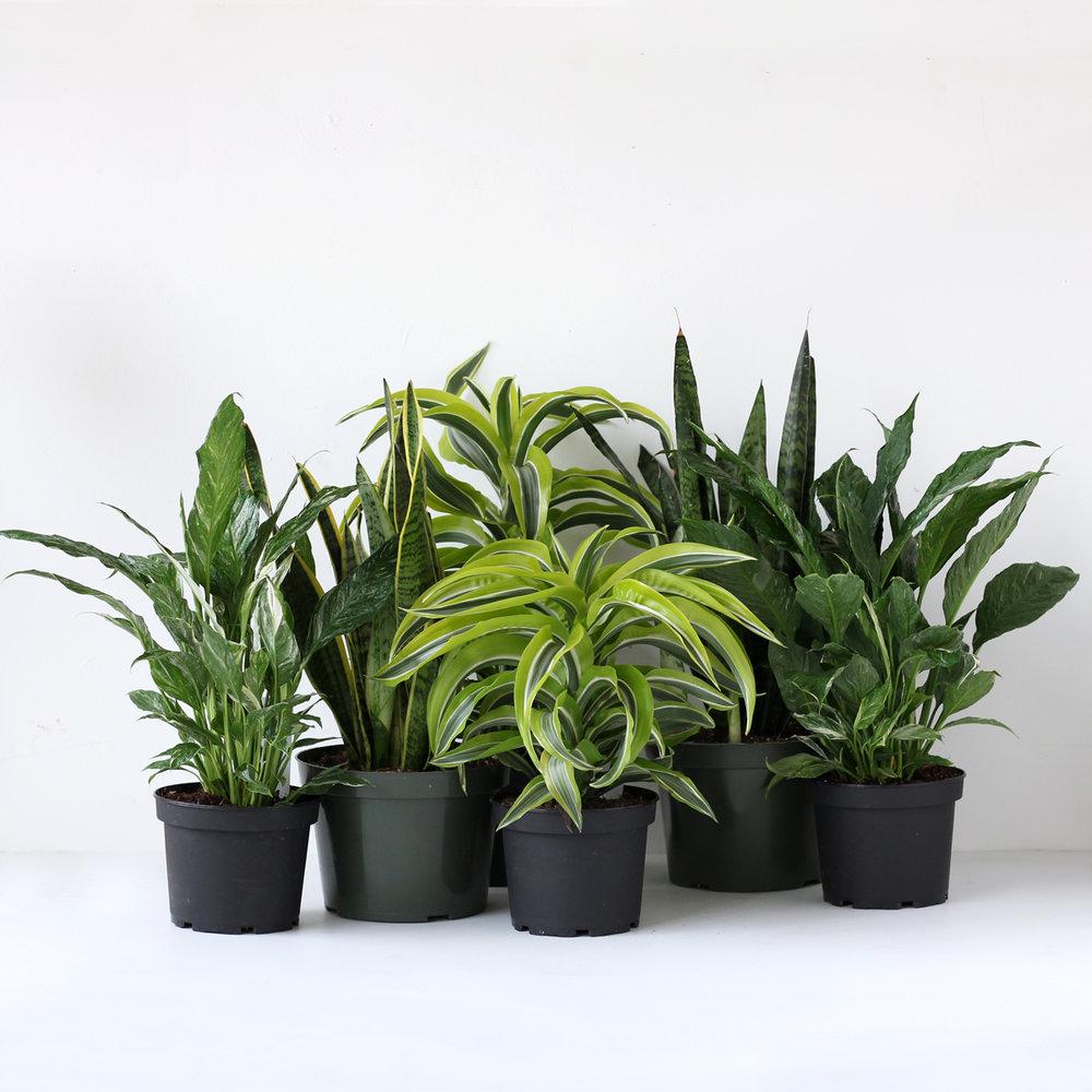 plantPURpackgroup.jpg