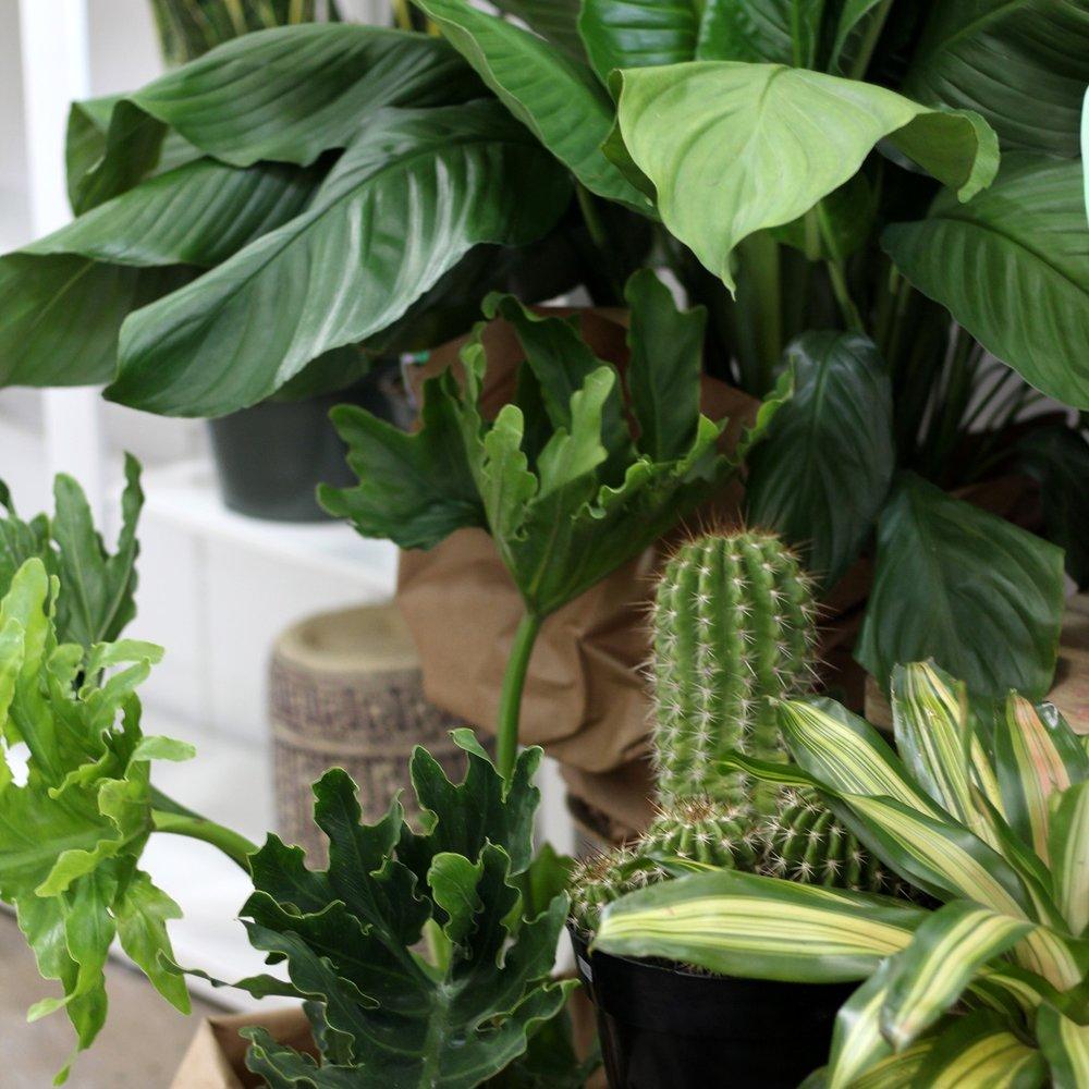 planttropicalassorted.jpg