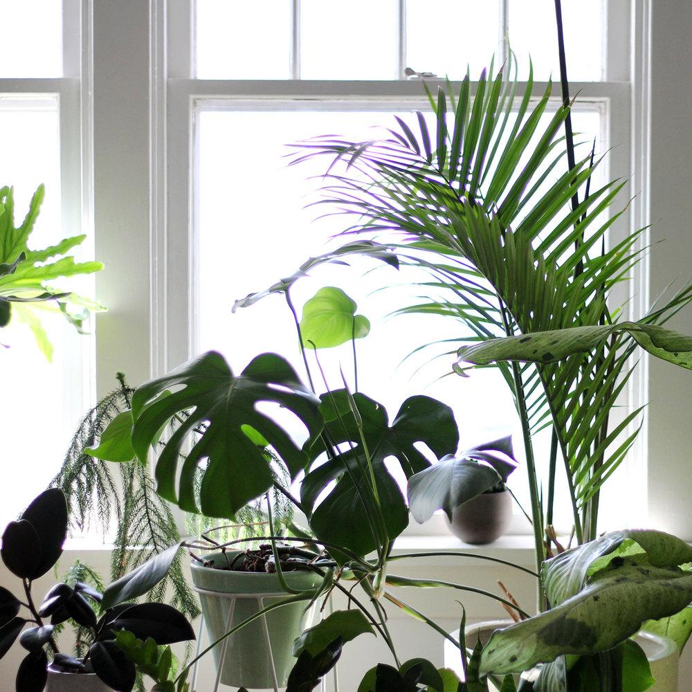 PLANTmyhouseplant.jpg
