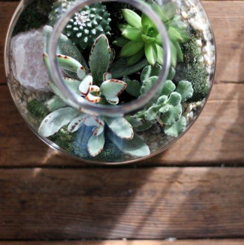 Workshops Events Verde Plant Design