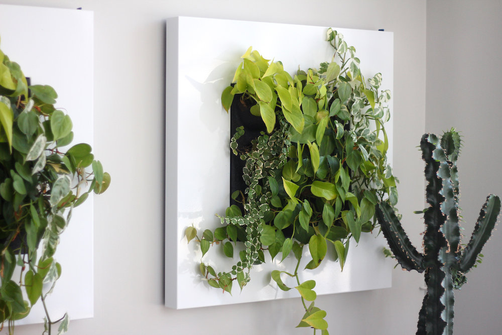Green Walls - Connect to nature year round.Beautiful to look at, living walls increase your general sense of well-being. They produce fresh oxygen and absorb sound. Studies show that having plants in the home and office is associated with decreased stress levels, and an increase in productivity and creativity.