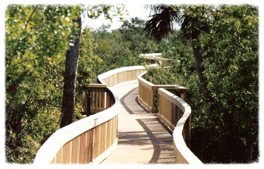 Wood Boardwalk