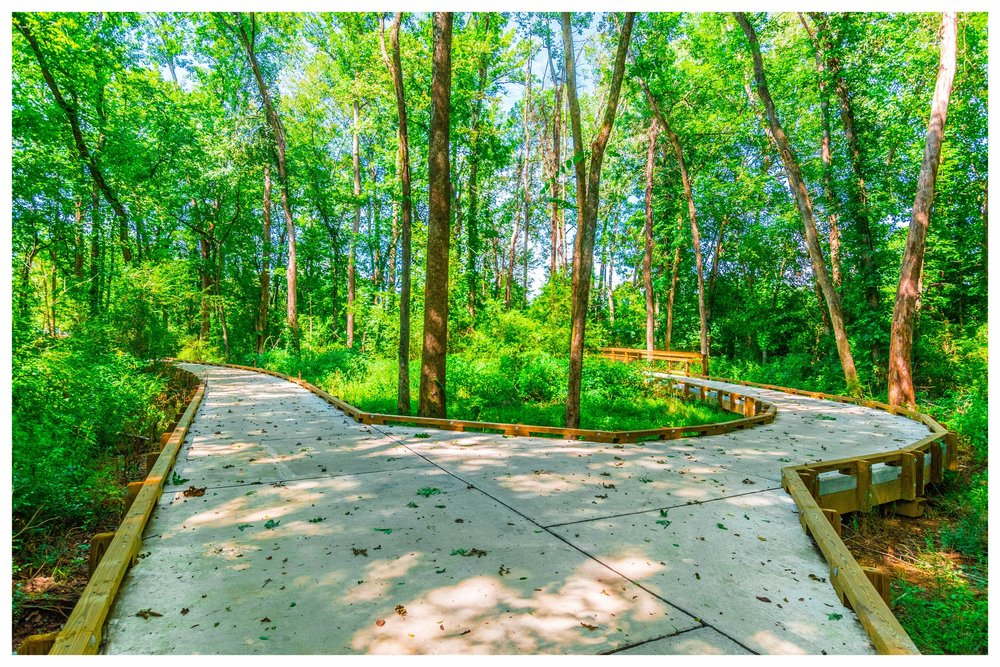 Nature Trail Boardwalk