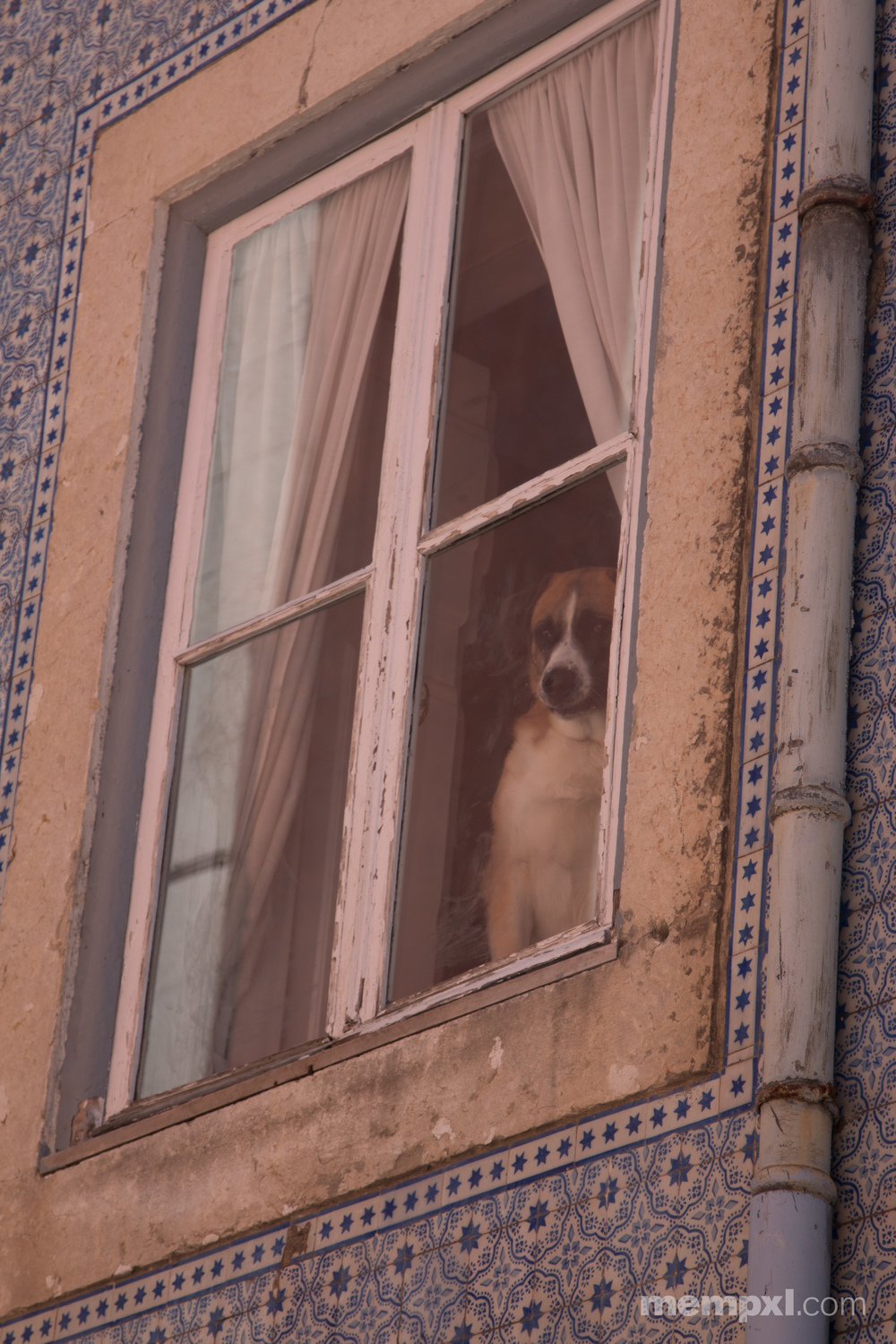 The Doggy in the Window.jpg