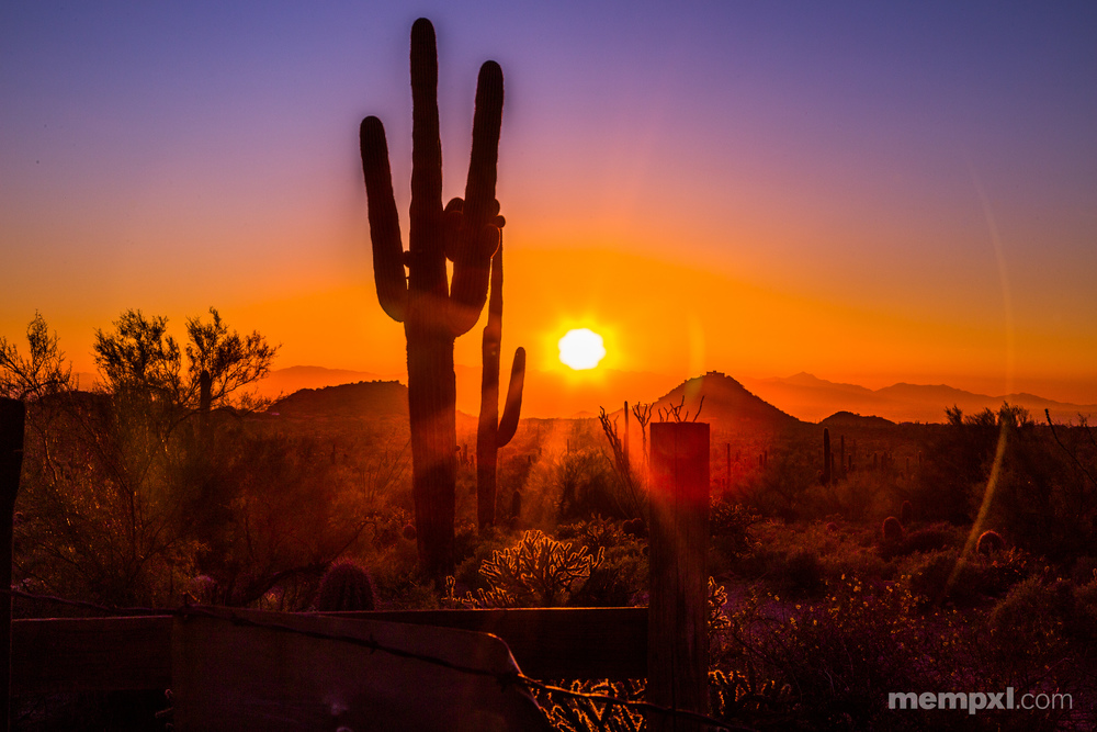 Colorful Dester Sunset with Cacti.jpg