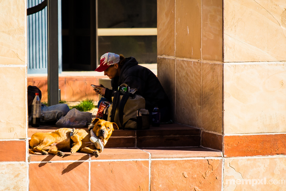 Homeless dog in Phoenix 2015 WM.jpg