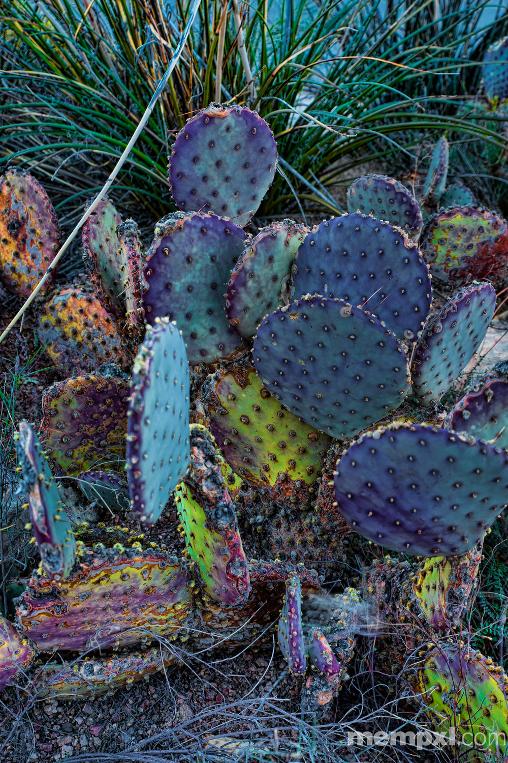 Colorful Cactus 2014 WM.jpg