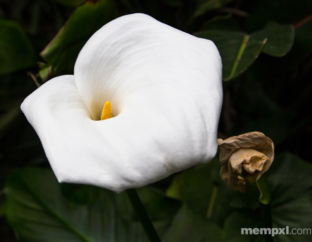 White flower Amsterdam 2014 WM.jpg