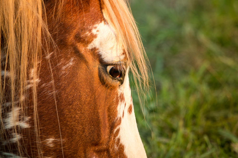 Pefect Lighting for a Horse Portrait.jpg