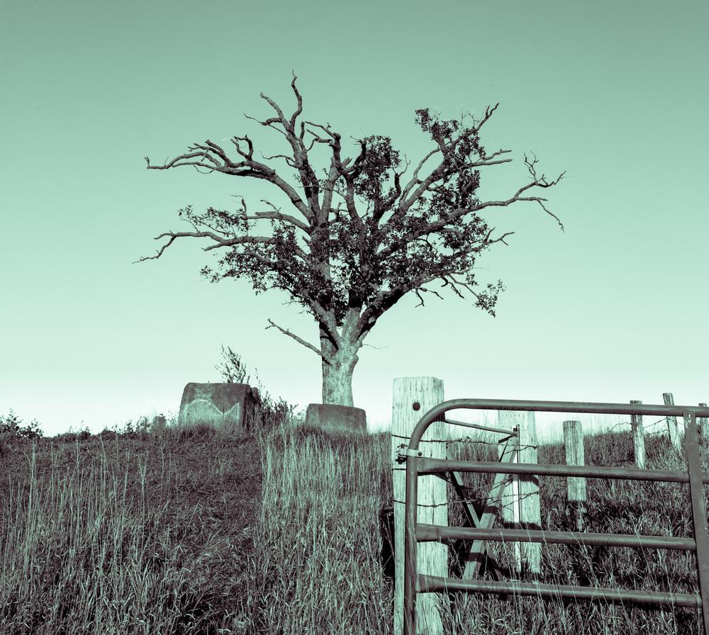 Kenzie's Tree_.jpg