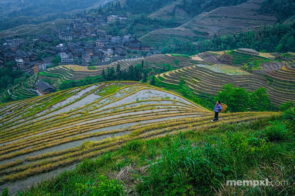 Rice Terraces - China April 2015.jpg
