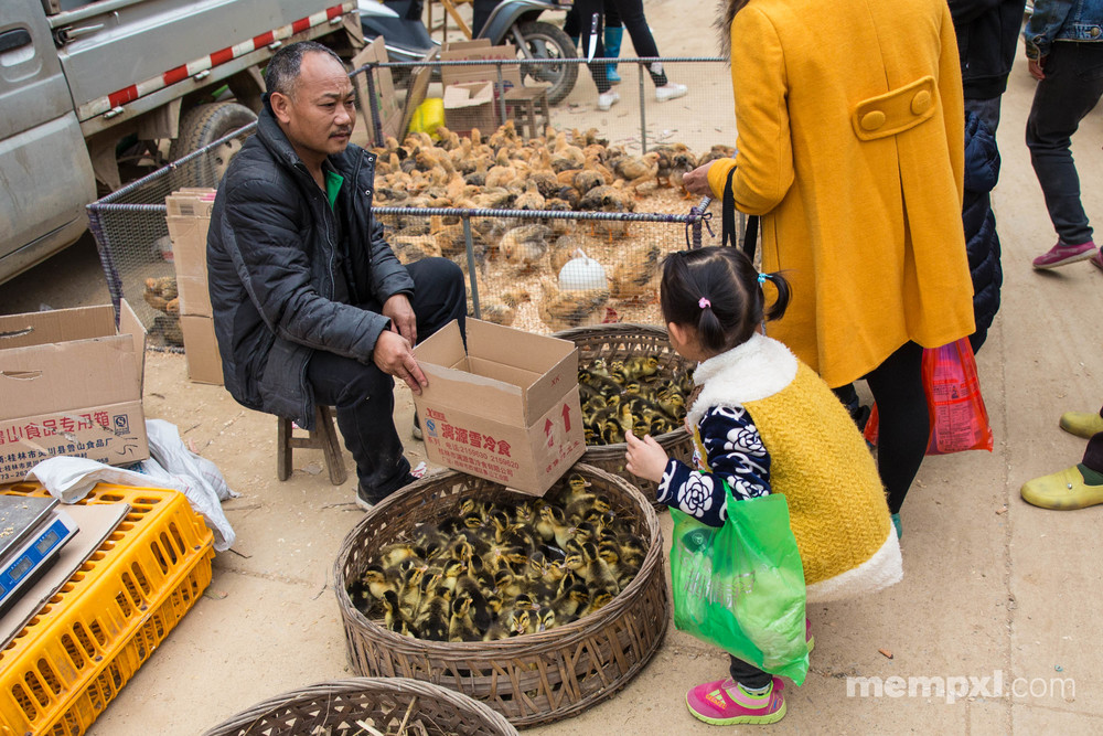 Little Girl and ducklings - Xingping April 2015 WM.jpg