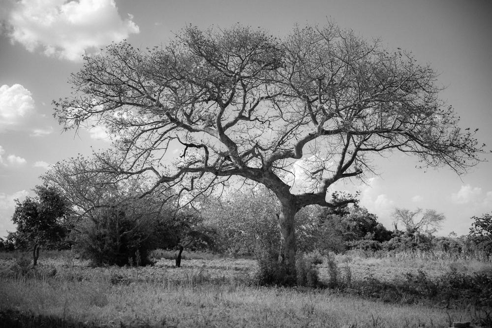 tree of life: uganda