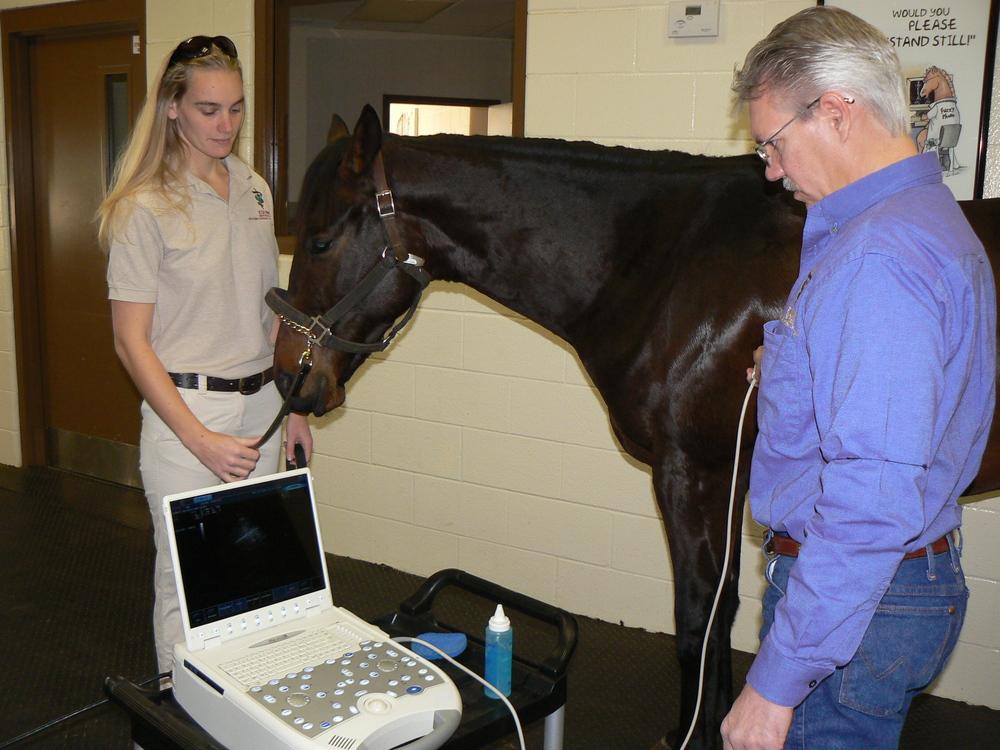 Chest ultrasound.JPG